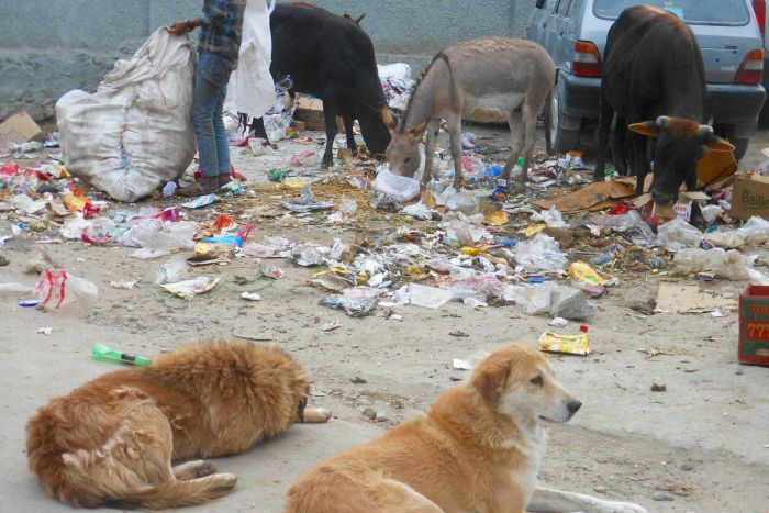 Donkeys, dogs and cows on the street in Ladakh, India