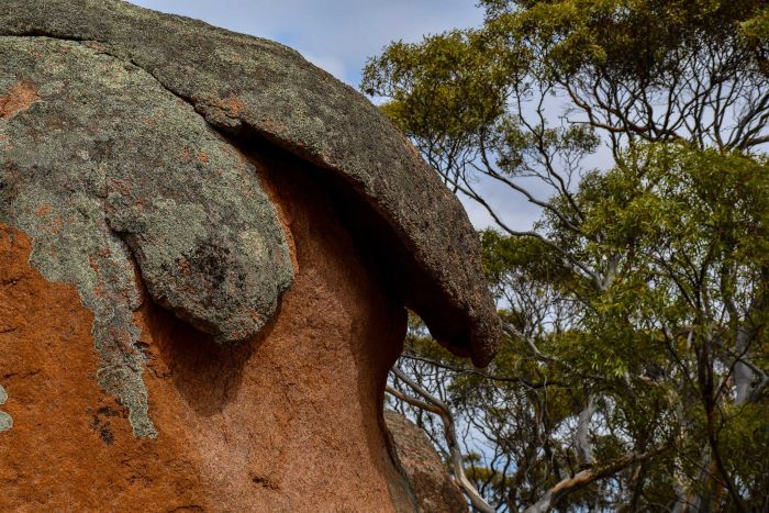 A red rock with a grey overhang.  There are gum trees in the background.