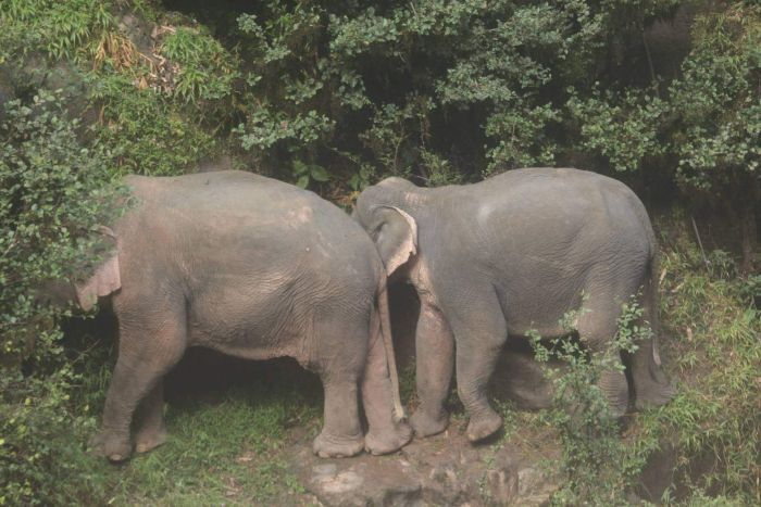 Two elephants stand on a ledge of rock