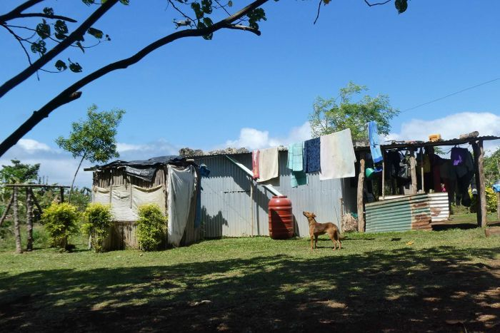 A dog walks under a clothesline, next to a tin house at a lush looking village on Efate, next to Rainbow City.