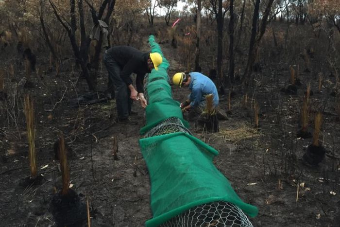 Researchers building a refuge for small mammals in a fire-affected area.