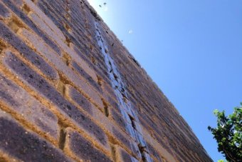 honey dripping down the external bricks of house with a couple of bees.