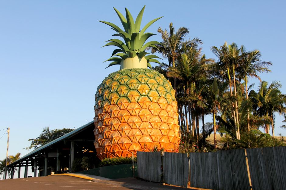 Image result for the big pineapple