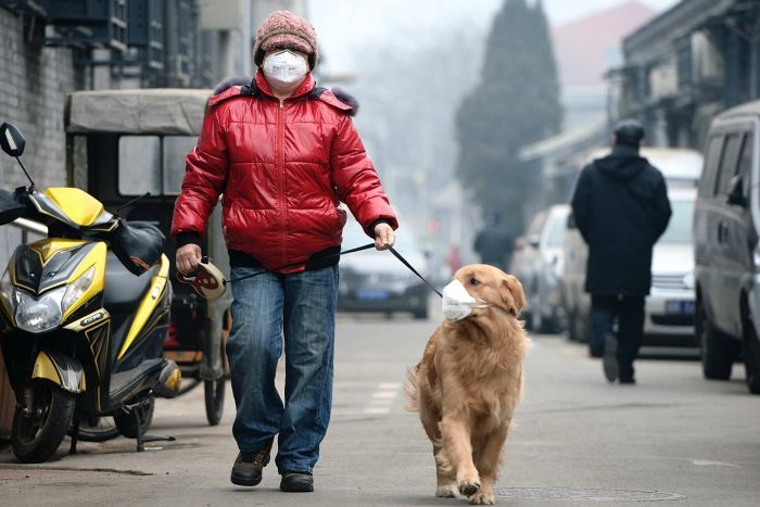 Man walks his dog with face masks on
