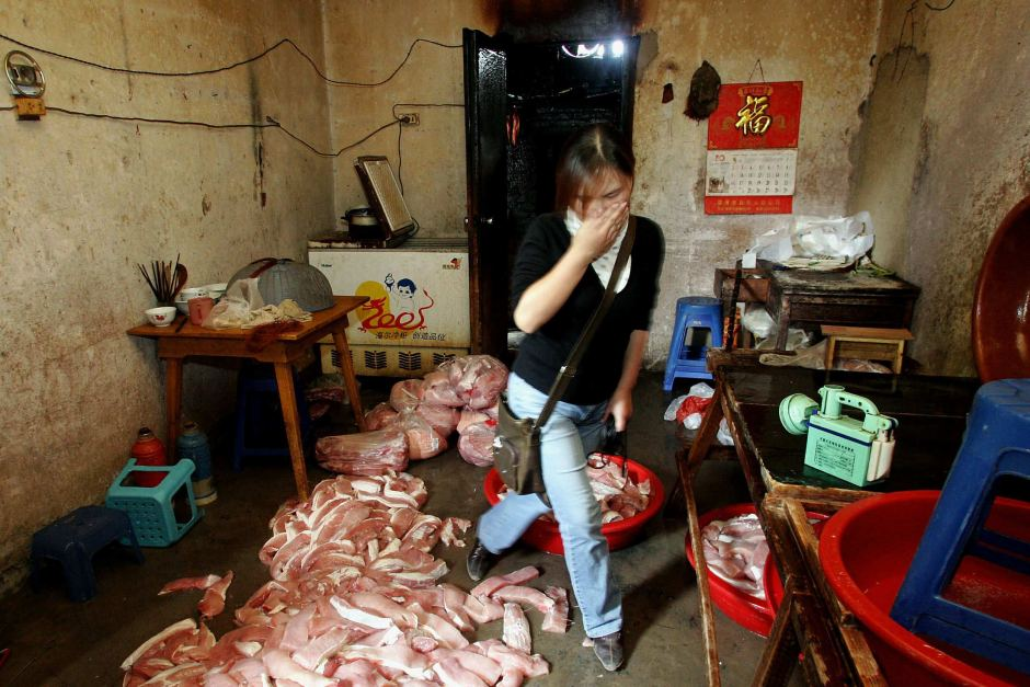 A reporter covers her nose from the stench of the rotting meat on the floor of an illegal meat processing factory in 2005