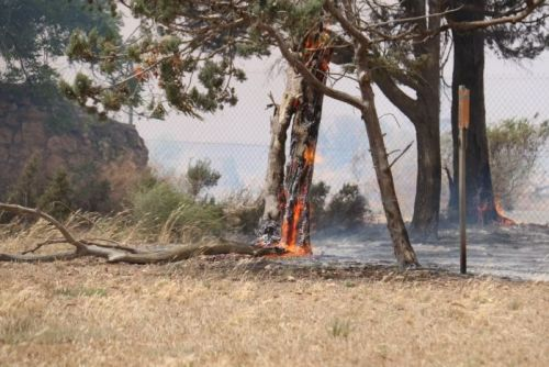 Tree trunk burns in the area of the Mallala bushfire Nov 25 2015