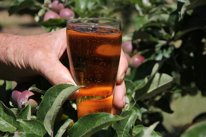 A man's hand showing a close up of apple cider bubbling in a glass with apples in the background