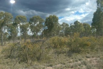 Trees and scrub on flat western Queensland farm