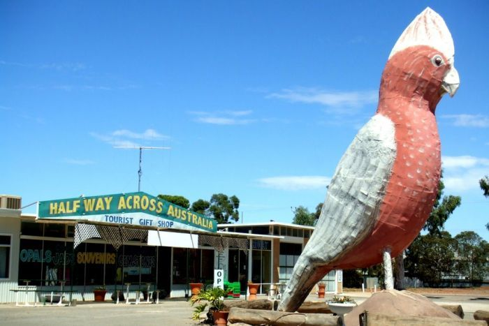 The Big Galah at Kimba