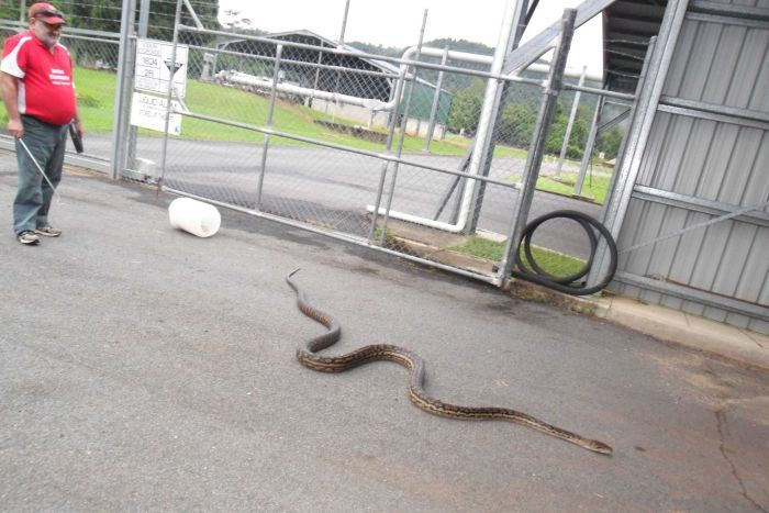 Mr Goodwin released the python into a nearby sewage plant.
