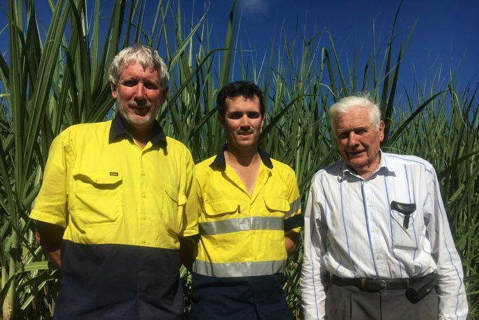 Garry, Paul and Doug Petersen stand in a canefield.