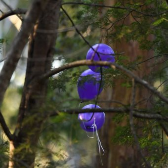 Balloons released in bushland where remains found