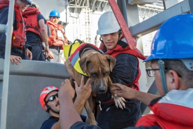 Dog rescued after he and his owners were lost at sea