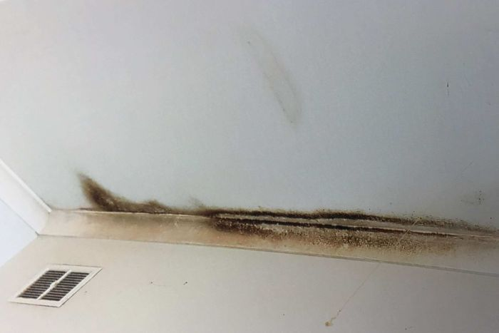 Mould growing on the ceiling of Jemima Balhas's home