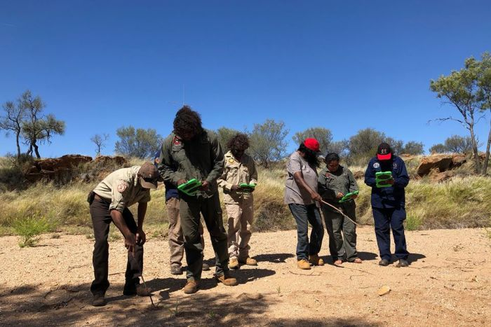 A group of rangers survey land looking for bilbies.