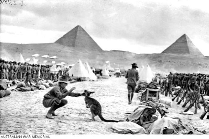 An Australian soldier plays with a kangaroo with the Pyramids in the background
