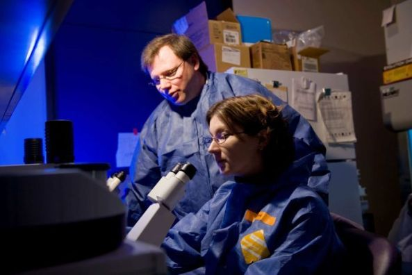 In Minnesota, a team led by Dr Louis M. Mansky has studied how HTLV-1 replicates itself inside the body.