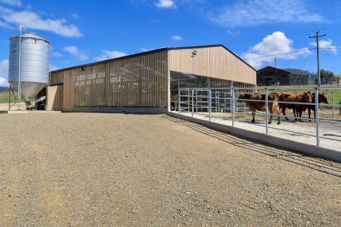 A shed built for cows with livestock out the front