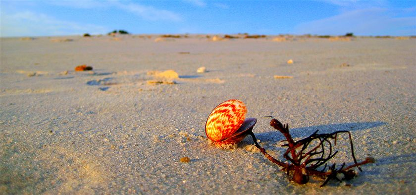 The rich tones of the setting sun lit this shell and its attached seaweed on a deserted pristine beach on a warm February evening. A fitting finale to a great holiday. (Rose Marie McMaster)