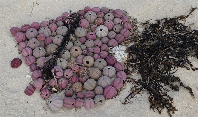 A child's sculpture on Kilcarnup Beach at Margaret River, WA. The pretty urchin shells are irresistable to adults and children alike, and the heart design speaks of little girls enjoying their time on the beach. (Peter Donecker)