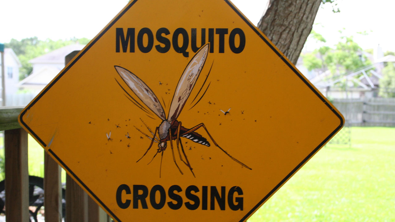 mosquito crossing sign72001558-159532