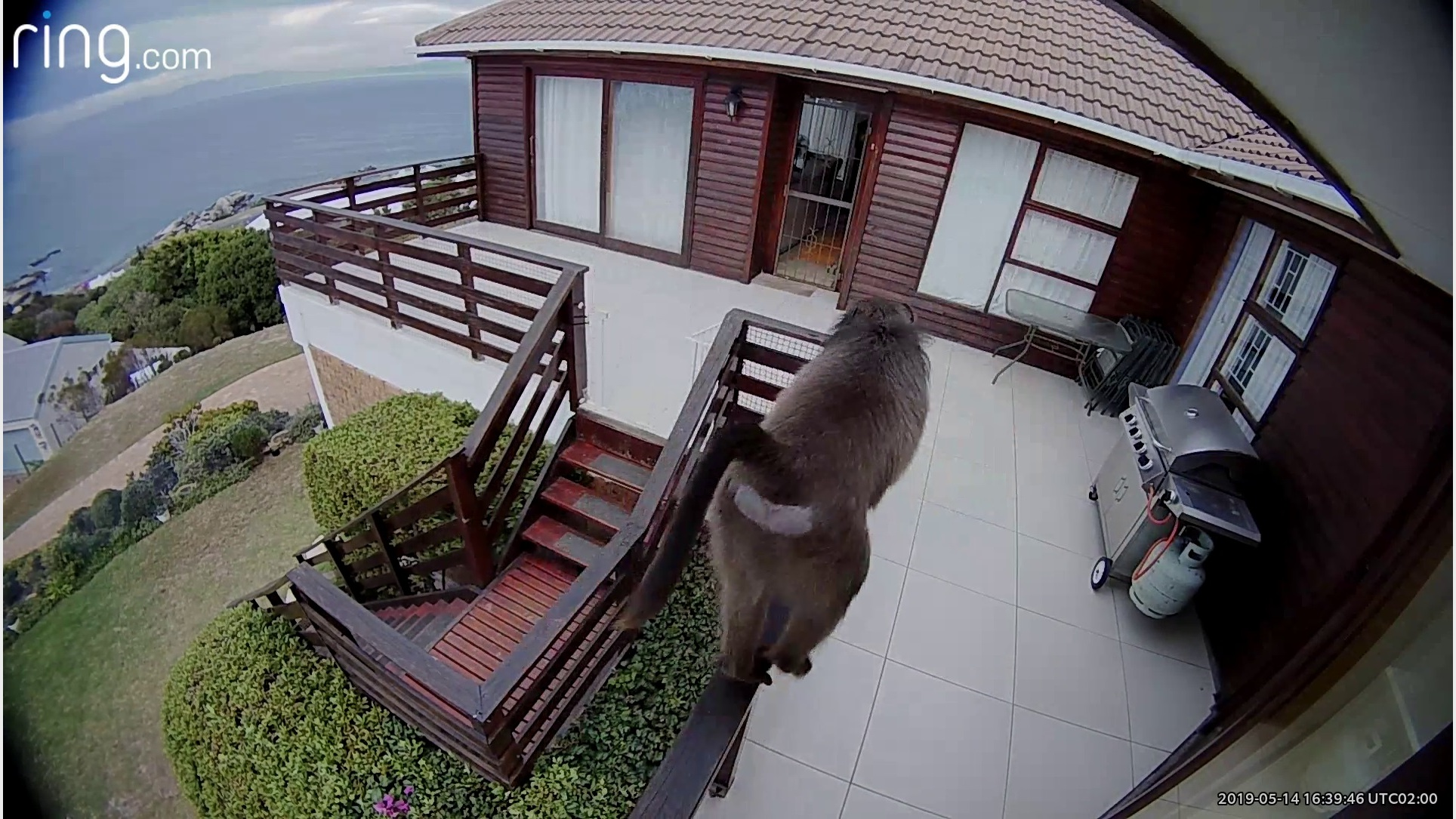Watch: Baboon attempts to break into home in South Africa