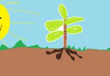 História da sementinha