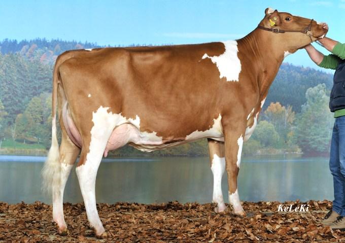 Guigoz VINCENT hongkong EX-90 2--01 2x 305 8'332 kg Milk 3,90% F 3,51% Prot.. 3--01 2x 305 10'123 kg Milk 3,83% F 3,54% Prot. Miss Protein EXPO SARINE, 2011 Owner / Besitzer / Propriétaire / Propietario: Daflon Gérard, Autigny, FR, Switzerland