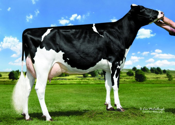 Hickorymea Signif Ohio-P-ET EX-90 2-05 305 15'731 kg (34'680 lbs.) 3.81 % F/MG 3.19 % Prot./Eiweiss G. Grandmother / Urgroßmutter / A. grand-mère / Bisabuela of GOLD-PP-RED