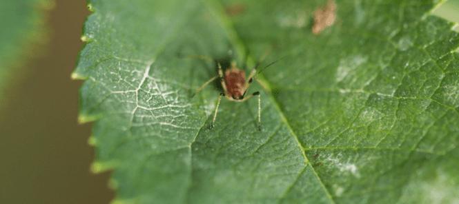 Flying Ants Pool