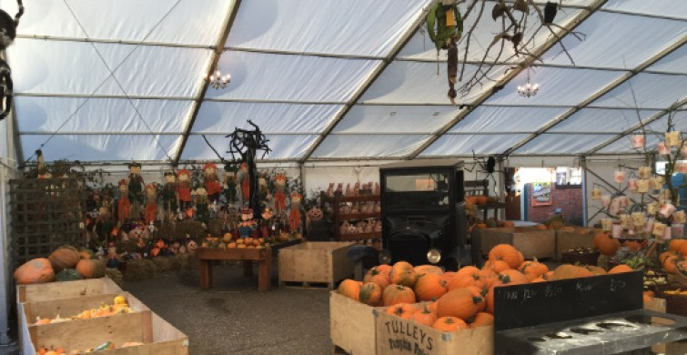pumpkins_in_marquee