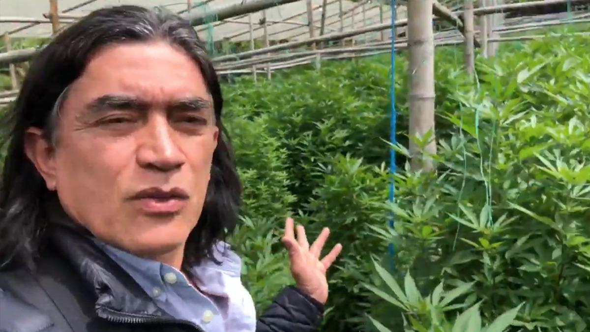 Cerca a la legalización: Bolívar radicará proyecto para legalizar el consumo  de marihuana – ABC Política