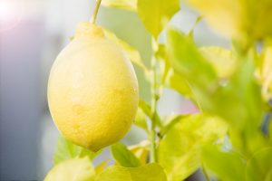 citroenboom