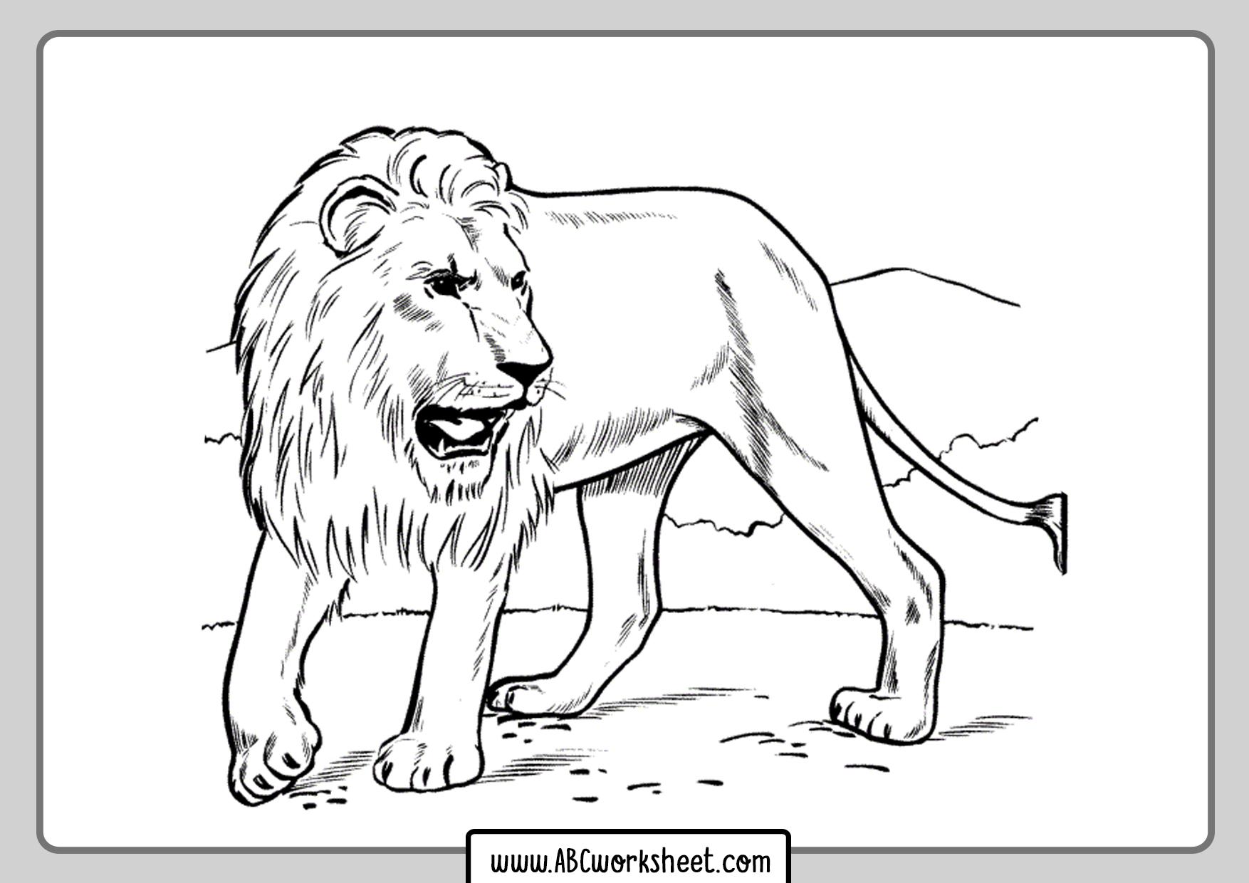 Lion Lion Coloring Books For Kids