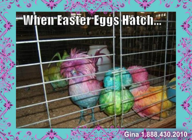 hatched easter eggs gina