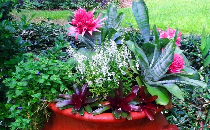 Plantings (11)
