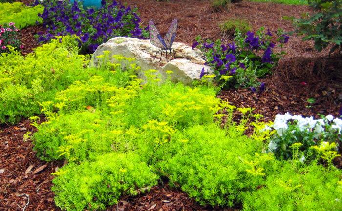 Plantings (4)