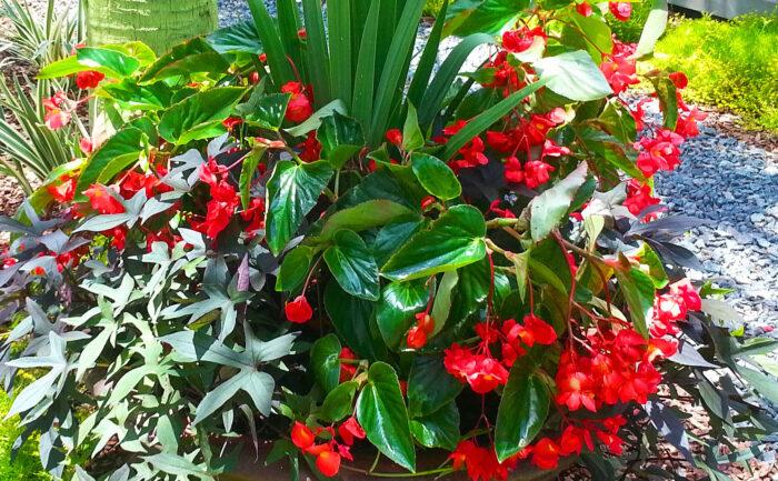 Plantings (8)