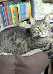 Warren Berry's bookish cat, Hemingway