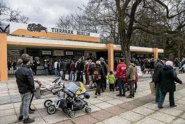Teure Tickets für Tiger, Jumbo und Co.
