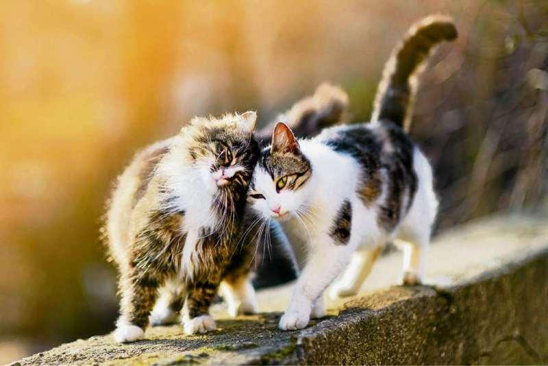 Gala für Tiere in Not