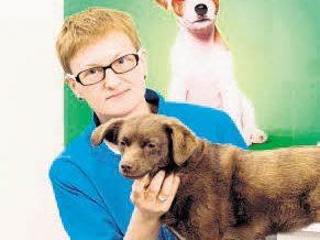 Kompetente Fellpflege für Hunde