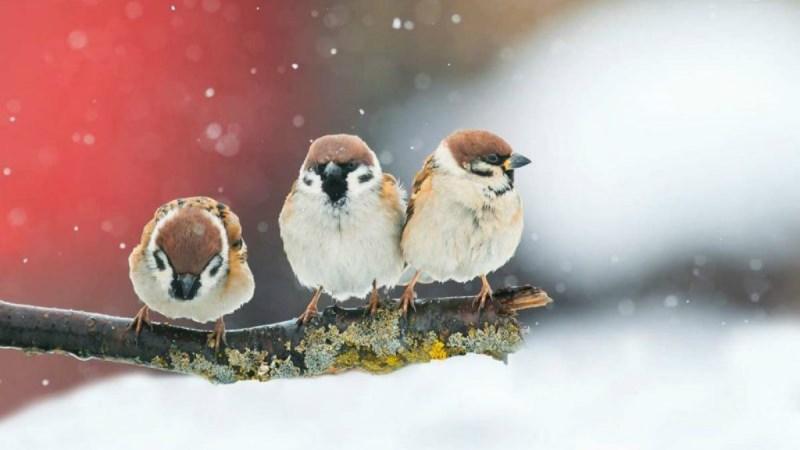 Die Stunde der Wintervögel
