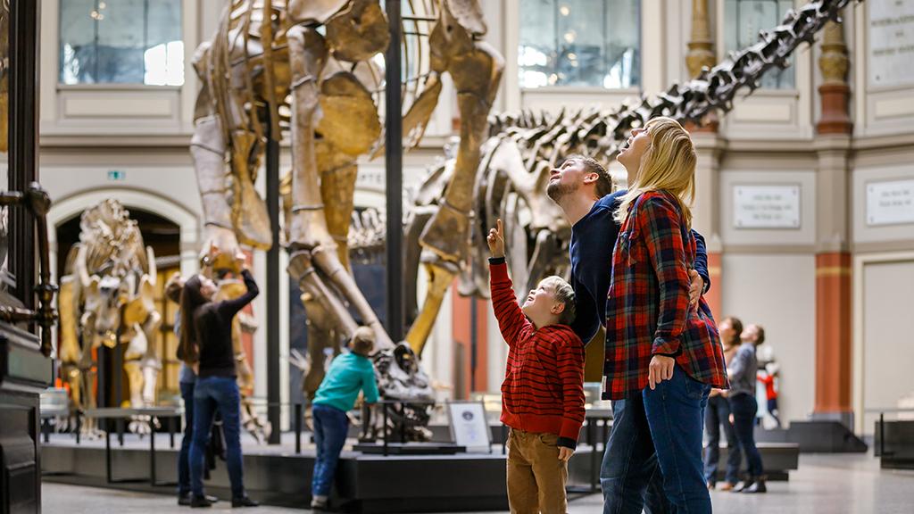 660.000.000 Euro für das Naturkundemuseum