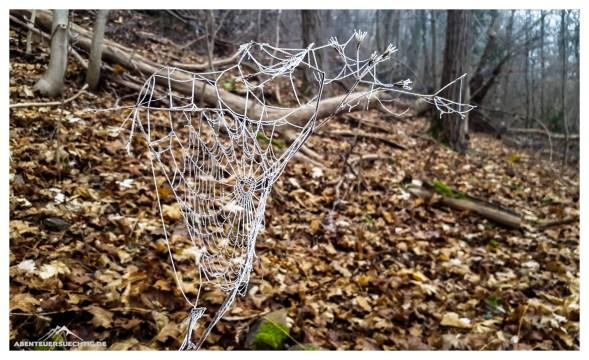 Tau auf einem Spinnennetz im winterlichen Wald