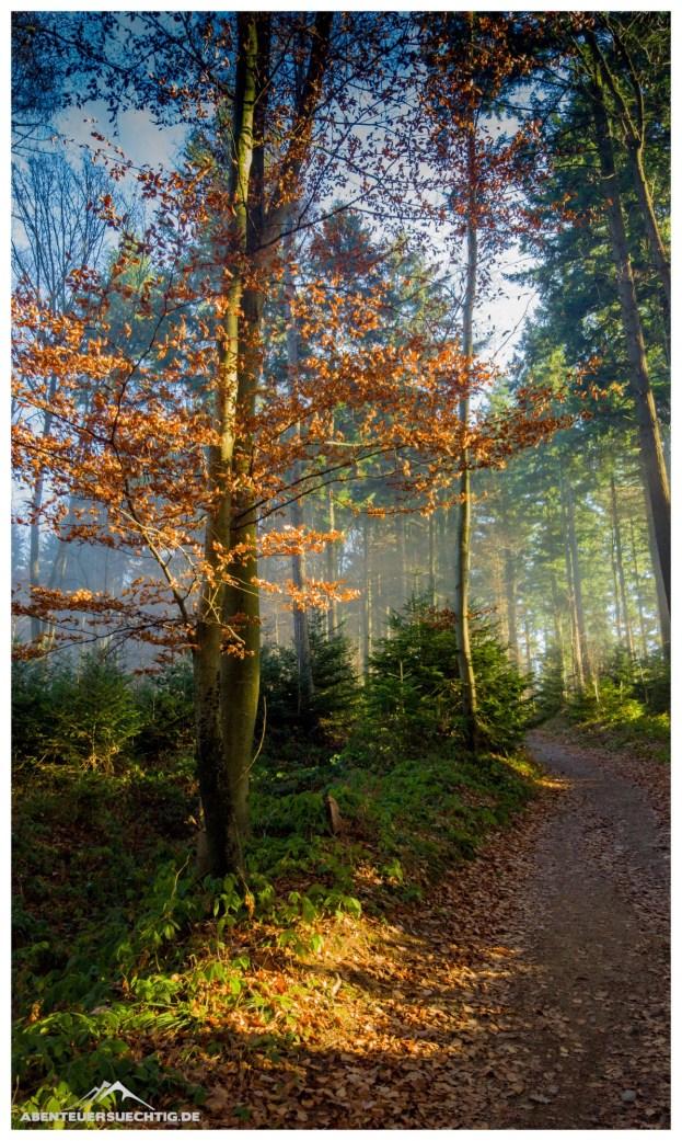 Wunderschöner, winterlicher Wald