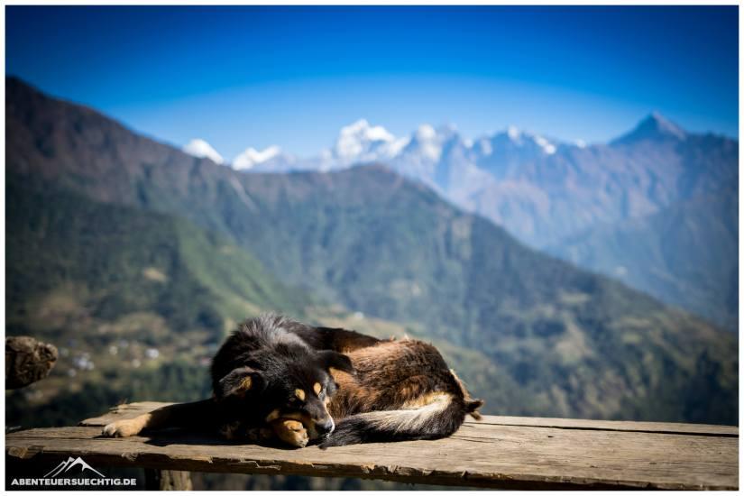 Hundeleben in Nepal