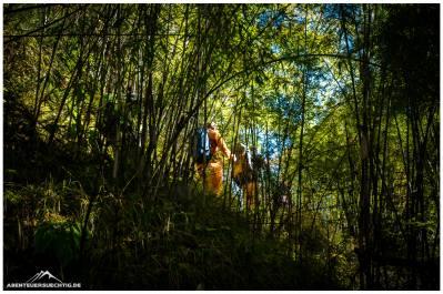 Sobald man absteigt folgt wieder dichter Bambuswald.
