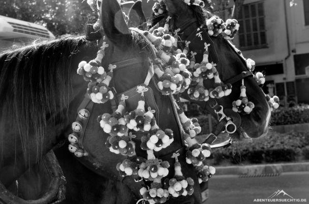 Pferde auf Mallorca