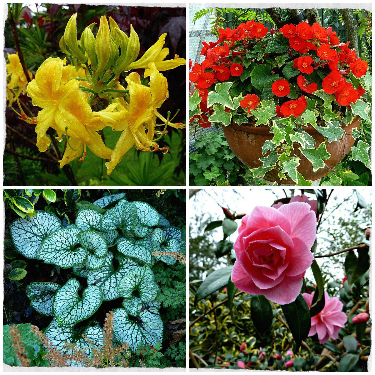 Back garden july 12th 7 aberdeen gardening - Collage 3